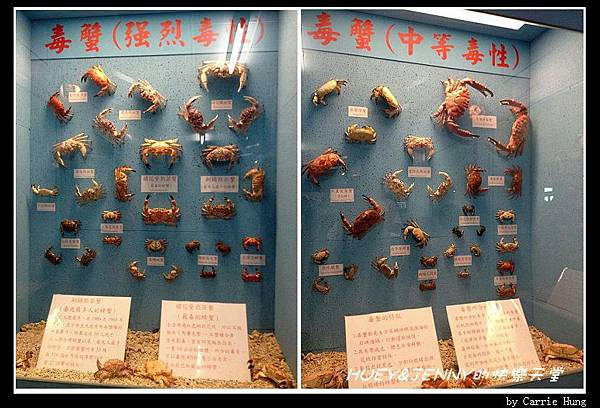 20140601_09 竹灣螃蟹博物館與大義宮海龜 18