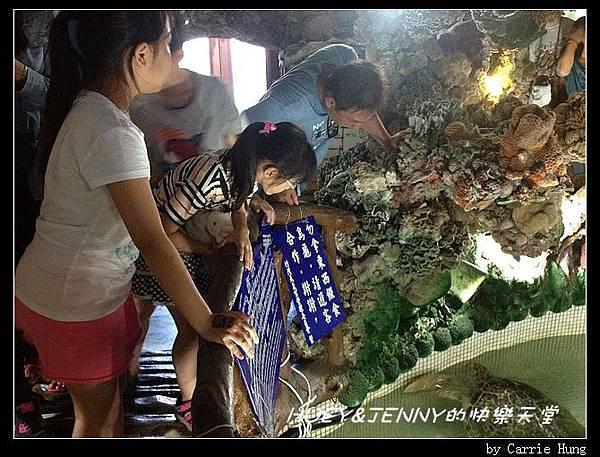 20140601_09 竹灣螃蟹博物館與大義宮海龜 22