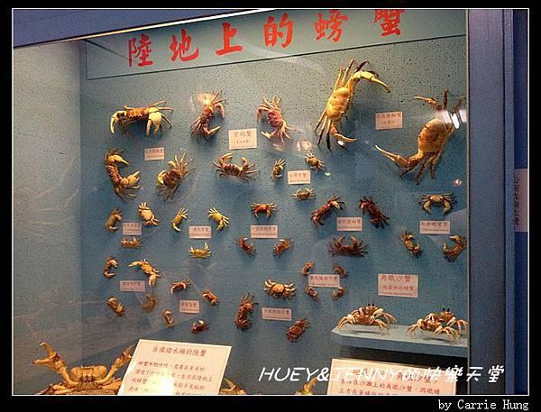 20140601_09 竹灣螃蟹博物館與大義宮海龜 17
