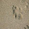 南寮海邊的小沙蟹