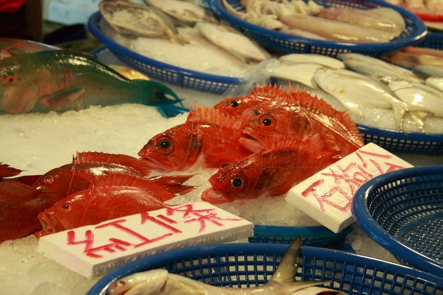 不知名的魚