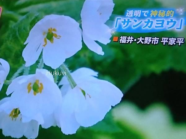 18-06-04-21-09-35-513_deco.jpg