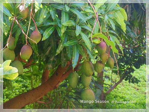mangotree