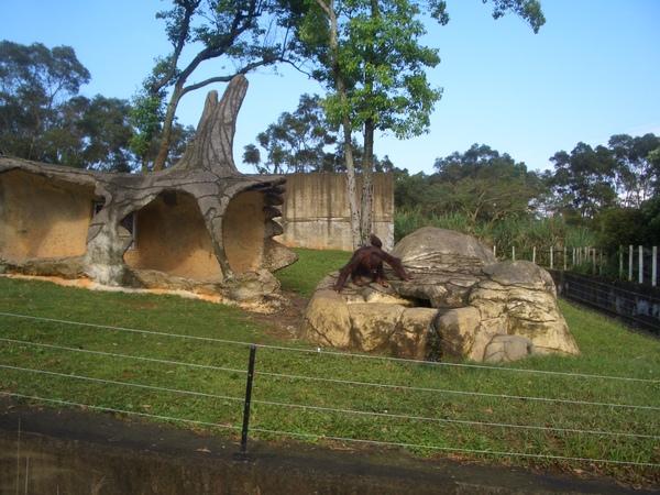 zoo..