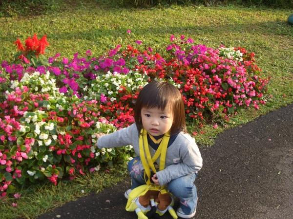 怎麼那麼愛花
