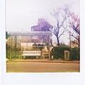 花與愛麗絲01.jpg