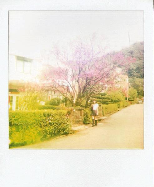 花與愛麗絲02.jpg
