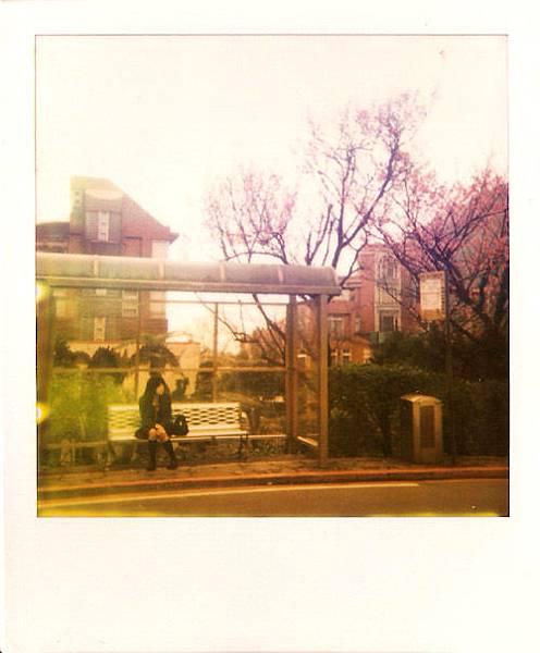 花與愛麗絲04.jpg