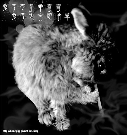 兔子不乖.jpg