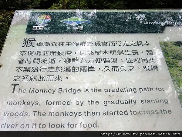 猴橋-1.JPG