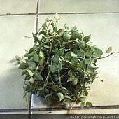 樂栽生活~植栽苔球自然有型