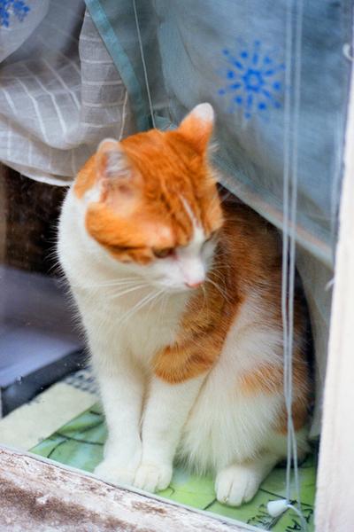 Montmartre cat.jpg