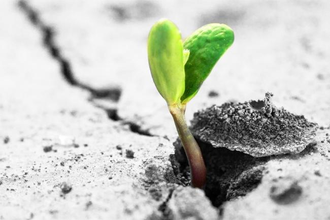 種子發芽2