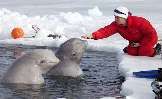全裸只為白鯨