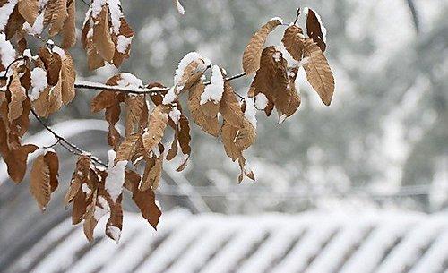 屋頂 - 大覺寺雪景 1