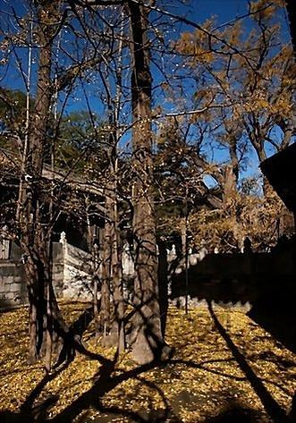 北京大覺寺深秋2