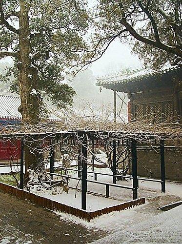 雪景 - 北京大覺寺 5