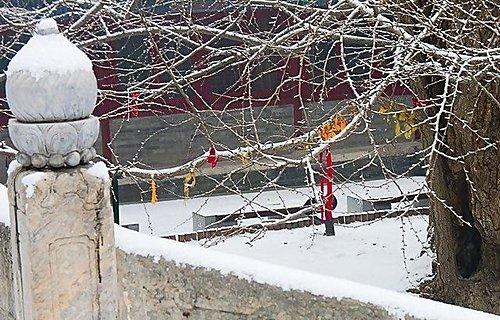 雪景 - 北京大覺寺 9