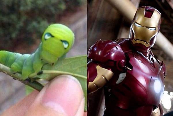 綠毛蟲,鋼鐵人