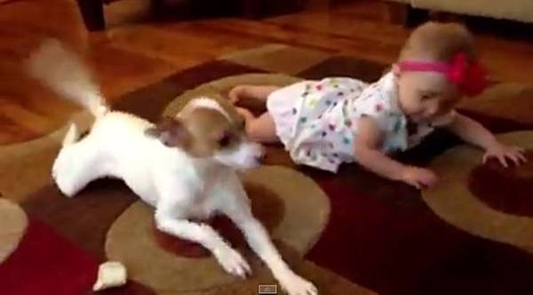 狗狗教嬰兒爬