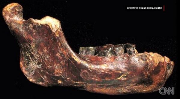 「澎湖原人」(Penghu 1)下顎骨化石