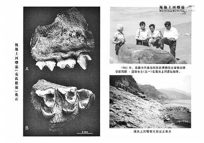 澠池曙猿化石