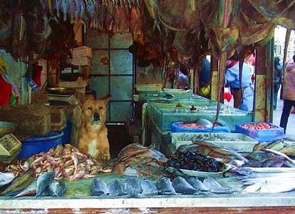 守肉攤的狗狗