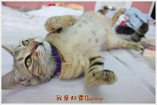 哈士奇居家生活-Have A Bunny Day 05