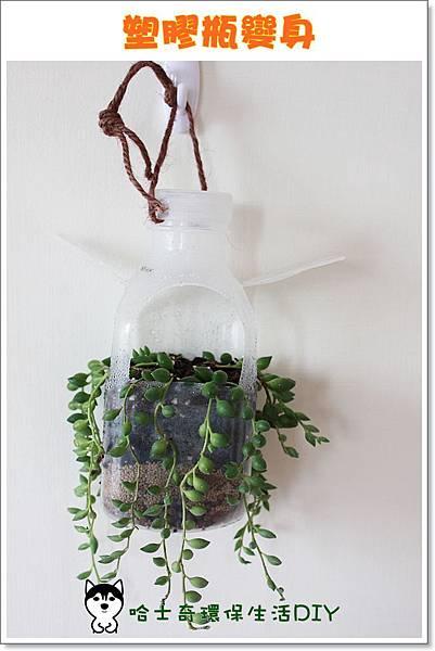 環保生活DIY-塑膠瓶吊盆56