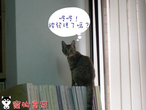 哈士奇居家清潔公司-寵物當家-Bunny的好奇心6.JPG