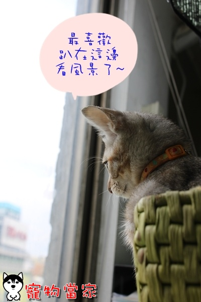 哈士奇居家清潔公司-寵物當家-Bunny最喜歡的位置6.JPG
