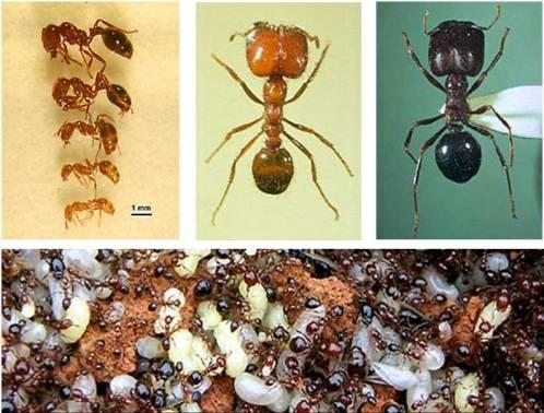 哈士奇居家清潔公司、家事服務-居家環境與健康-紅火蟻.jpg