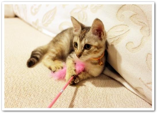 【寵物 影片】到底是Bunny玩逗貓棒還是都貓棒玩Bunny?4.JPG