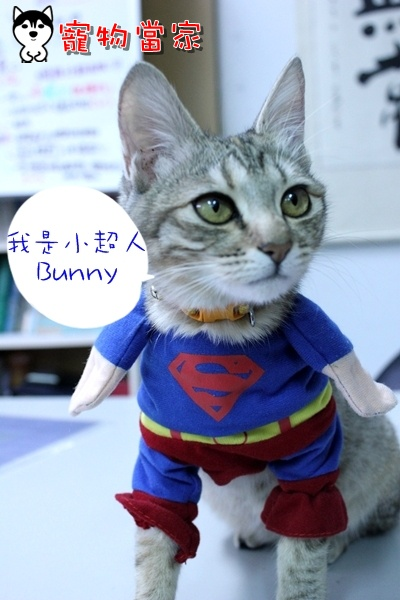 哈士奇居家清潔公司-寵物當家-Bunny小超人1.JPG