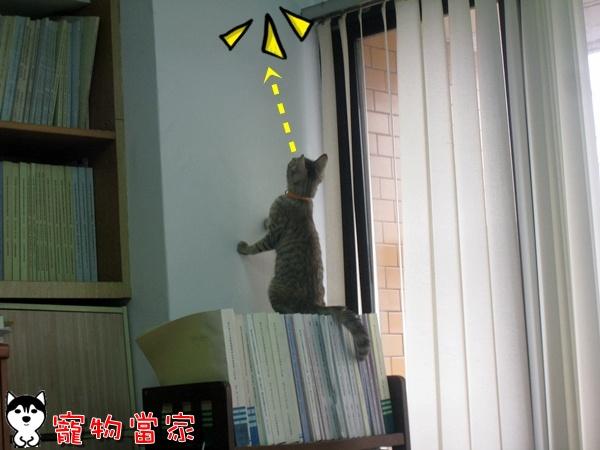 哈士奇居家清潔公司-寵物當家-Bunny的好奇心1.JPG