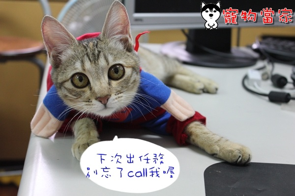 哈士奇居家清潔公司-寵物當家-Bunny小超人8.JPG