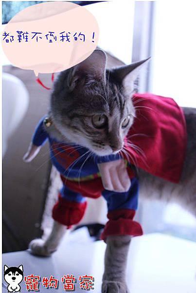 哈士奇居家清潔公司-寵物當家-Bunny小超人3.JPG