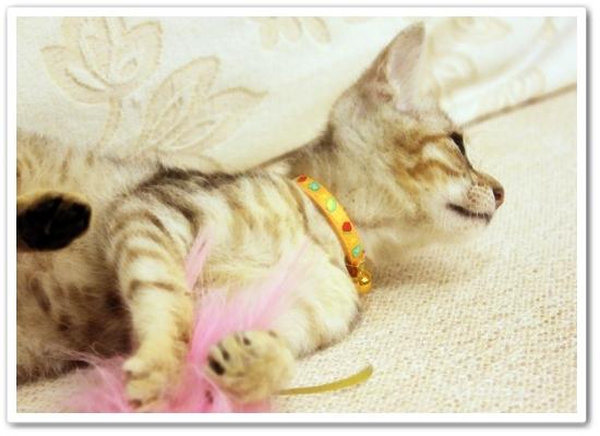 【寵物 影片】到底是Bunny玩逗貓棒還是都貓棒玩Bunny?2.JPG
