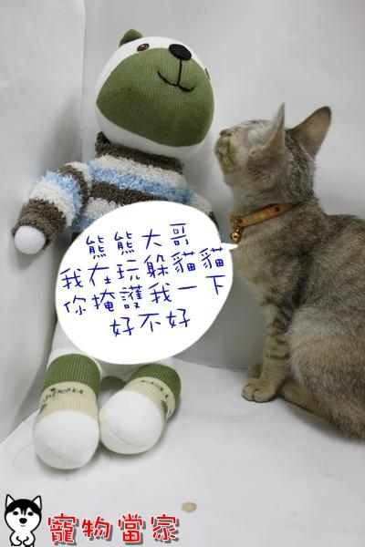 哈士奇居家清潔公司-寵物當家-小貓愛玩躲貓貓9.JPG