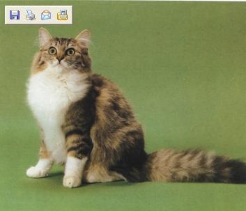 哈士奇居家清潔公司-寵物當家-什麼人養什麼貓_處女座VS挪威森林貓.jpg