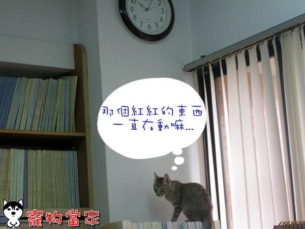 哈士奇居家清潔公司-寵物當家-Bunny的好奇心8.JPG