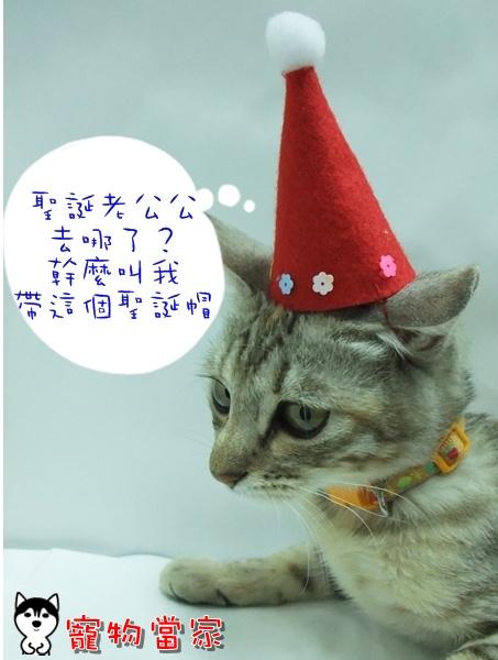 哈士奇居家清潔公司-寵物當家-聖誕貓1.JPG