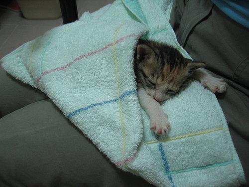 喔~睡的好舒服唷~!!