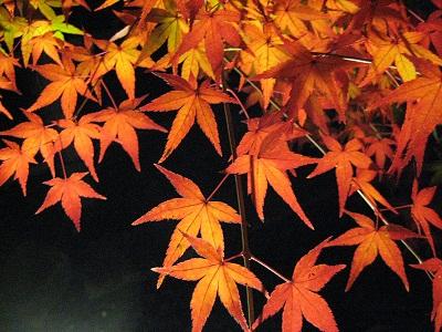 2009 Japan Kyoto