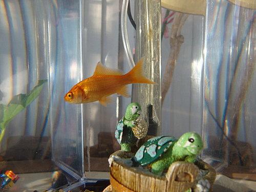 魚兒1.jpg
