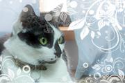 BG_cat_bibi_20081211