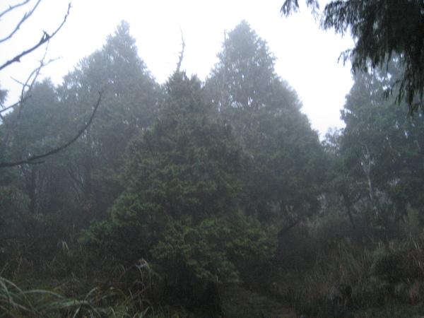 望洋山步道