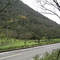 2008陽明山花季