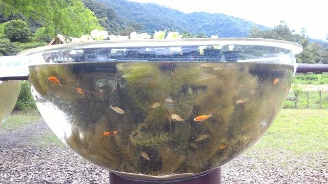 魚菜共生系統