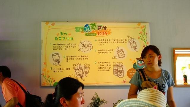 魚菜共生瓶DIY